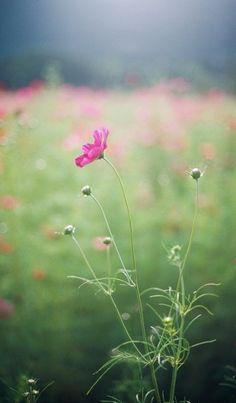 Secret Garden by Donna MacDonald