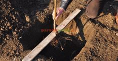 3. Fixarea nivelului de plantare Plantar, Fruit Trees, Grape Vines, Garden Tools, Organic, Gardening, Paradis, Projects, Ideas