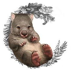 Illustration of a wombat for the Bush Babies II coin series - My list of beautiful animals Australian Animals, Australian Art, Cute Wombat, Baby Animals, Cute Animals, Australian Christmas, Animal Drawings, Pencil Drawings, Perth