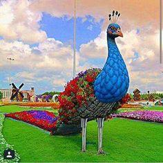Miracle garden only Dubai