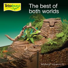 Can't choose between land and water for your little pets? Do both with a Tetrafauna® Viquarium® Kit! This terrarium and aquarium in one sports gorgeous decoration and superior ReptoFilter Whisper® filtration technology. 55 Gallon Aquarium, Tetra Fish, Submersible Pump, Little Pets, Whisper, Turtle, Environment, Technology, Kit