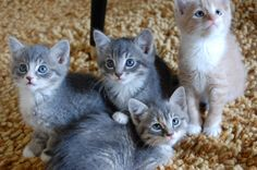 https://flic.kr/p/2Y87G8   from photo shoot with sue's foster kitties
