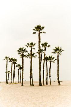 https://flic.kr/p/6B3tcy   Palm Trees, Santa Monica