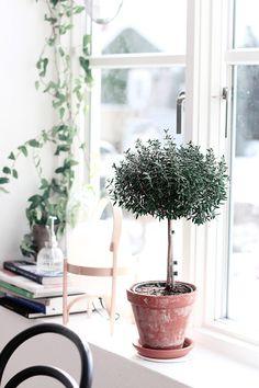 Pricken över livet - Myrtenträd