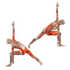 Bikram triangle left - Trikonasana Bikram variation left - Yoga Poses | YOGA.com