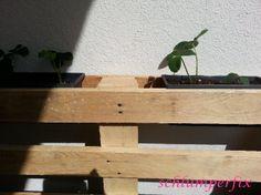 Blumenpalette / Plants in palette