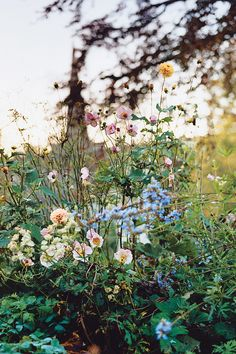 A detail from the same border in fall featuring salvia and Japanese anemone. (Photo: Carlotta Cardana)