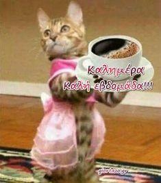 Καλημέρα και Καλή εβδομάδα!........giortazo Greek Language, Greek Quotes, Kittens Cutest, Good Morning, Weekend Gif, Funny, Pictures, Animals, Window