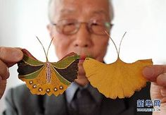 Handmade butterfly created by 81-year-old Gu Houxin with a leaf of a Ginkgo tree in Suzhou, east China's Jiangsu Province. Gu has so far made over 700 such butterflies by painting coloured patterns on Ginkgo leaves. The Ginkgo Pages Forum - Blog: January 2012