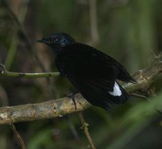 List Of Birds, Fiji Islands, Animals, Jungles, Nature, Animales, Animaux, Animal, Animais