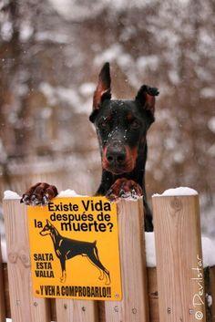 Imagenes de Humor con Animales - Taringa!