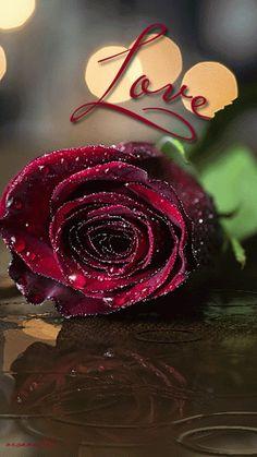 Love Rose gif