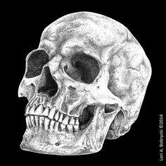 Human Skull (stippling) by CajunArts