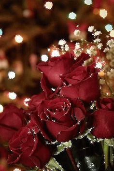 Beautiful Flowers Pictures, Beautiful Red Roses, Flower Images, Flower Pictures, Morning Board, Morning Gif, Friendship Flowers, Rose Flower Wallpaper, Hearts And Roses