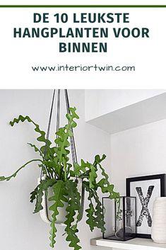 Home Living, Green Grass, New Room, Dream Big, House Plants, Home Decor, Boards, Tips, Blog