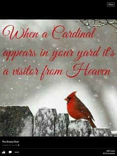 My father was born in December. On a snowy winter day, when I'm feeding the birds and I see a beautiful red cardinal nearby, I smile. Dad has come to visit me. Pretty Birds, Beautiful Birds, Cardinal Birds, Tier Fotos, Winter Beauty, Jolie Photo, Winter Scenes, Bird Feathers, Animals