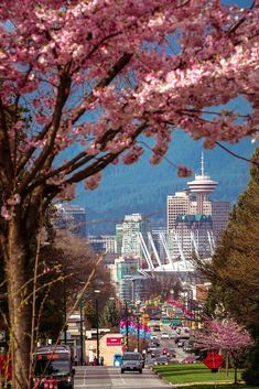 I love Vancouver! Have lived in Kits and N.V as well. Now live in the suburbs but love to visit !  Truly beautiful B.C. milder temps close to ocean and mountains.