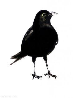 maartje van den noort grafisch illustratie natuur vogels zwart wit kunst merel poster
