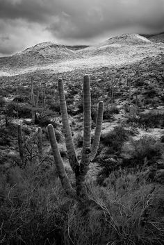 Desert Storm in B/W | Flickr - Photo Sharing!