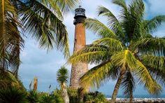 Florida, Leuchtturm, Palms