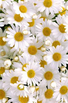 White Things: 50+ Things That Are White in Nature • Colors Explained