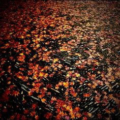Maple leaves on a stone path Stone Path, Maple Leaves, Paths, To Go