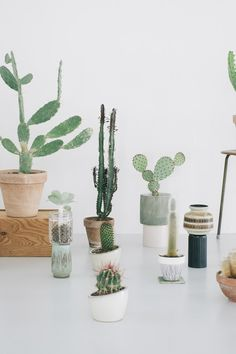 8 Places to Feed Your Cactus Craze - We are mystified by most of the things that go viral these days, from avocado toast and Stranger Things to unicorn hair. But one trend we totally 'get' is the Internet's love for all things cacti—the plants themselves, of course, but also the paraphernalia. Why? There's just something about the prickly specimans that transports us to dreamy desert locales as close to home as Arizona and Texas, and as far away as Spain and Monaco. In case you were…