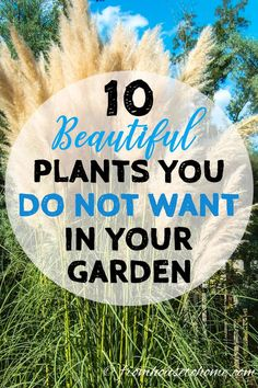 Invasive plant species are difficult to maintain and can destroy the natural environment. Find out which perennials to avoid planting in your garden. #invasiveplantspecies #perennials