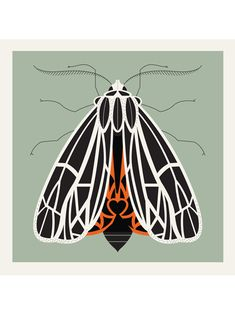 10 x 10 Posters – Horizontal 3-Color Screenprint Signed and numbered Hand Printed on 100 lb. Archival Paper Shipping on this product is via Priority Mail only. Extra shipping charges may apply depending on where it is being shipped. Beautiful Bugs, Beautiful Butterflies, Cut Out Canvas, Tiger Moth, Moth Tattoo, Bug Art, Insect Art, Guache, Hand Art