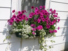 In this box are 2 ivy geraniums, 3 petunias, one vinca, with 3 alyssum planted along the front edge.