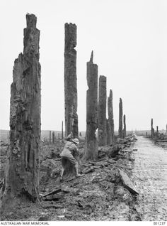 View of the gateway to the battlefield of Ypres through Chateau Wood, in the Ypres Salient. Note the soldier in the foreground, taking cover behind the shell damaged tree trunk. 5 November, 1917.