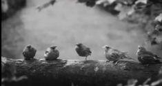 Dubbird