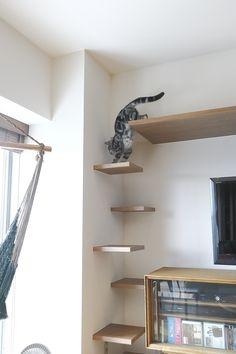Cat shelves Source by missmahala