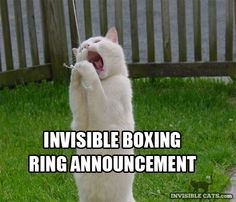 boxing cats invisible announcement