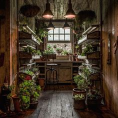 The Potting Shed: A Green Oasis in Alexandria This restaurant in Alexandria, Australia, is a green oasis. Plants adorn every wall and nook while beautiful reclaimed wood furniture makes for a cozy interior.The Potting Shed doesn't only serve amazing food, Future House, My House, House Wall, Future City, The Grounds Of Alexandria, Alexandria Sydney, Witch Cottage, Irish Cottage, Shed Plans