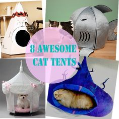 8 Awesome Cat Tents For Your Fur Kid - Meow-Cat.com