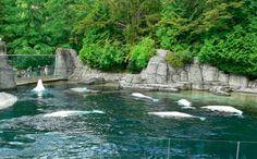 Vancouver Aquarium Canada Vancouver, Vancouver Travel, Vancouver City, Visit Vancouver, Vancouver Aquarium, Vancouver Art Gallery, Travel Blog, Visit Canada, Tourist Spots