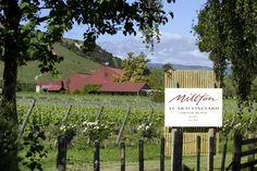 Millton Vineyard and Winery, Gisborne, New Zealand - Te Arai Vineyard