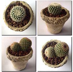 Beton saksılar atölyemizin minik kaktüsleri ile şenlendi✌️☺️ #new #year #2015 #christmas #cactus #gift #art design #special #plant #landscape #green #love #garden #gardening #nature #flower #succulent  #hediye #bitki #beton #saksı #kaktüs #yeni #yıl #2015 #surpriz #yesilatolye