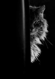 Cat. ≧^◡^≦ °l