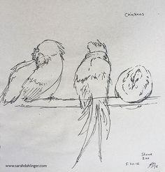The best part about chickens is that they can turn themselves into blobs.  #seenunseenbook #bird #birds #birdart #ornithology #birdsofinstagram #art #sciart #illustration #animal #wildlifeart #sketch #animalart #sketchbook #drawing #nature #artwork #zoo #scienceart #womeninart #ebook #illustratedbook