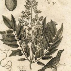 Fabulous Early Botanical Printable! Botany