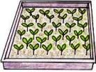 Vegetable Seeds and Seedlings    Planting vegetable seedlings rather than seeds, is usually easier and more successful in the organised chaos of a no dig garden. When you also grow your own seedlings, it is far more economical than purchasing them, as well as being quite gratifying.