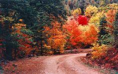 It's Autumn...
