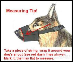 bark-stop-tool-for-dog-muzzle-grooming-no.jpg (534×460)