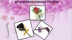 Stop running around in search of wholesale wedding flowers. Visit http://www.wholeblossoms.com/wedding-flowers.html