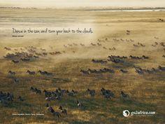 Botswana's wild Kalahari reserves offer sensational game viewing & combine easily with Chobe & the Okavango Delta for an extraordinary safari - ask us how. Okavango Delta, Wild Life, Luxury Brochure, Inspirational Wallpapers, Travel Images, Africa Travel, Zebras, Travel Advice, Luxury Travel