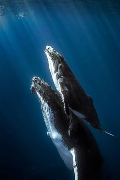 Humpback Whale Pictures, Images and Stock Photos - iStock