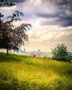 Beautiful view of London from Greenwich Park Hill near the Royal Observatory. photography with a girl reading on the grass