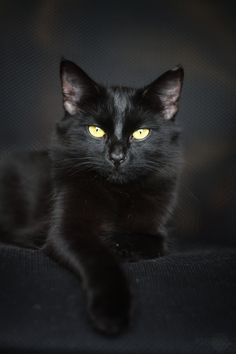 photo: Cat life | photographer: Jankoviča | WWW.PHOTODOM.COM. She has eyes like my beautiful black cat Xena :)